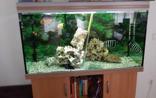 venta de acuario rena 440 litros