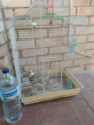 jaula loros periquitos