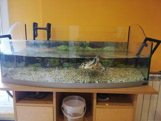 acuario tortugero + filtro exterior 300 litros