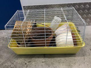 Jaula hámster ratón, caballa, conejo