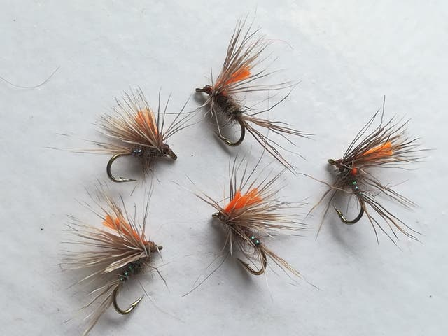 70 moscas secas