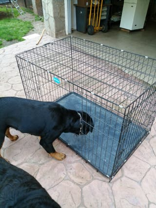 Jaula plegable de metal para perros Songmics