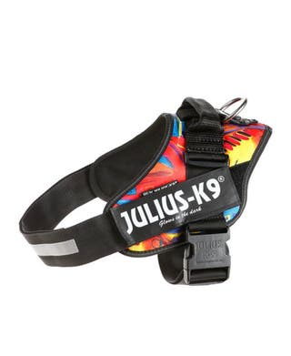 Arnes JULIUS K9