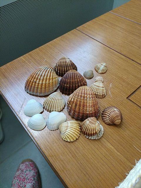 Conchas de playa