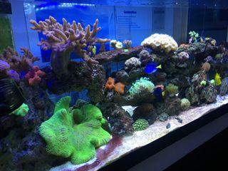 Vendo acuario marino 450litros