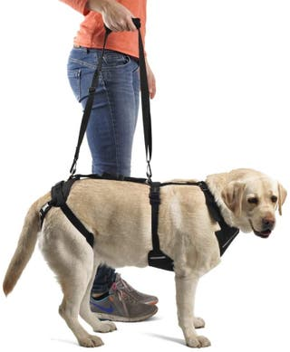 Arnés ortopédico canino integral nuevo
