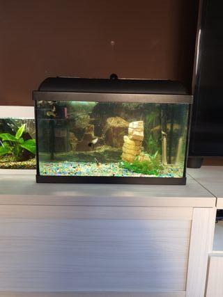 acuario/pecera de 40 litros