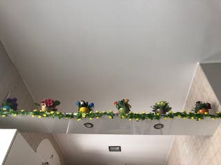 6 plantas decorativas