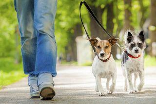 Paseo Perros Can Rull y cercanías
