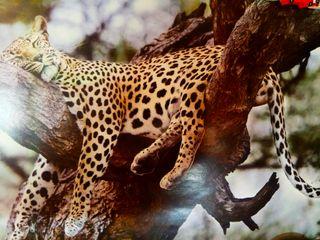 imagen de leopardo