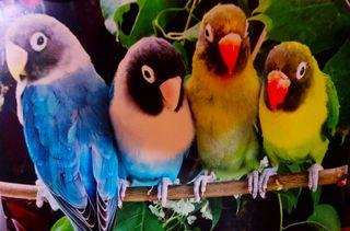 imagen de papagayos