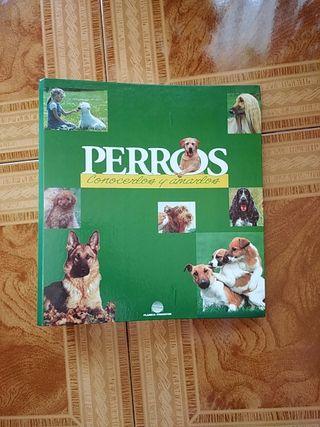 archivador con información sobre razas de perros