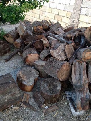 sevende tronco de pino