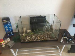 Acuario de 60 litros + accesorios