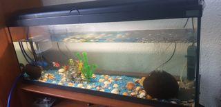 acuario con acesorios