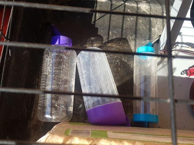trasportin y jaula para conejo