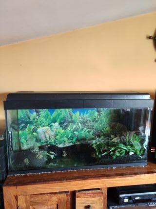 kit acuario 120lts