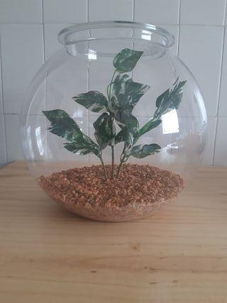 Pecera 7 litros con piedras y planta