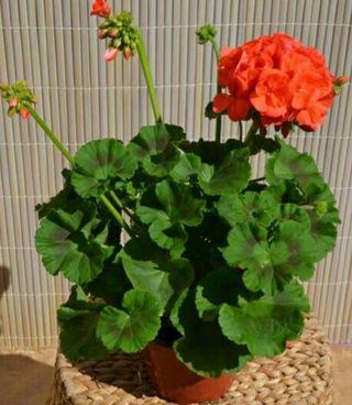 Planta de flor ( Mas plantas en mi perfil