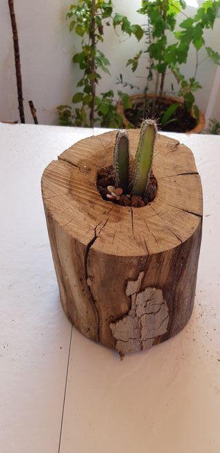 macetero tronco de madera con cactus