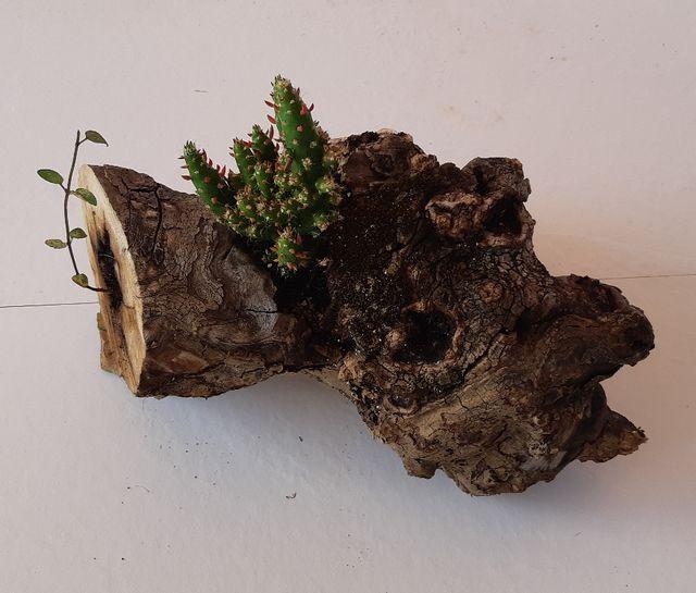 macetero de madera con cactus y menta