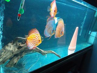 acuario 122x3ox50