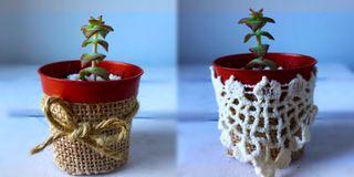 Planta con Tiestos decorativos
