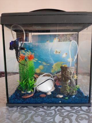 pecera completa de peces .acuario