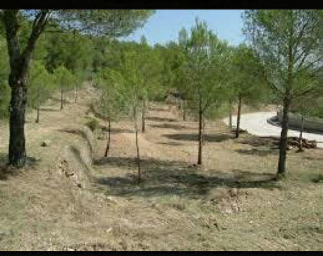 limpieza de jardines y bosques