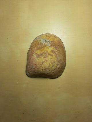 Fosil Bivalbo