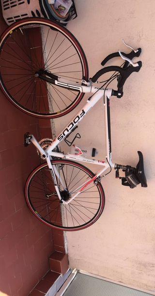 Bicicleta carretera Focus variado
