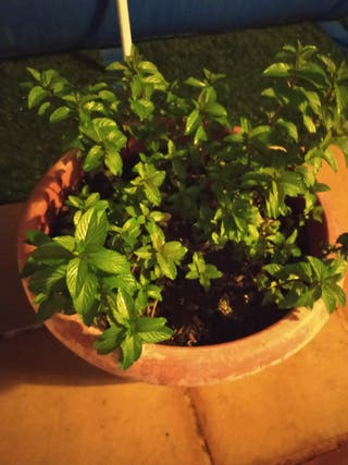 cambio todo tipo de plantas