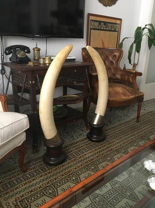 Cuernos replica elefante