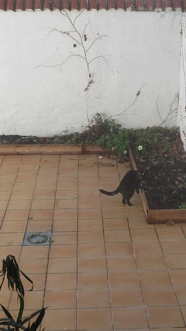 Adosado en la Flecha (Arroyo de la Encomienda, Valladolid)
