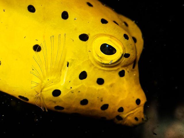 cámara subacuática Olympus
