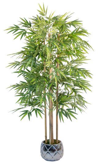 Bambú 1,5 m (Planta para Decoración)