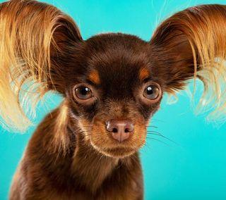 se busca peluquera canina