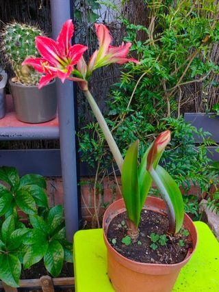 Tres plantas con maceta
