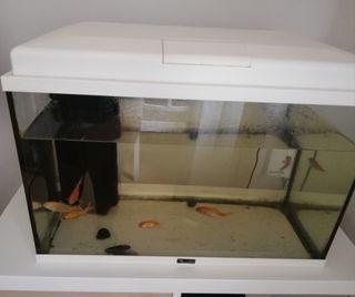 URGE SACAR acuario pecera blanca