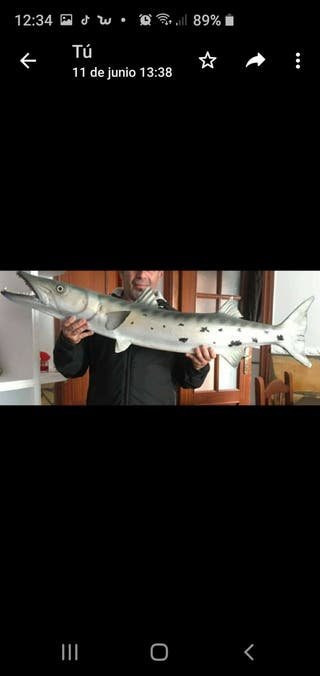 barracuda decoracion