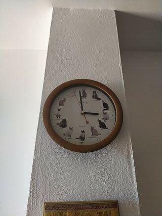 reloj de gatos
