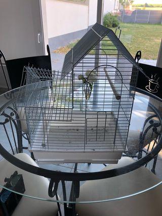 Cage petit oiseau