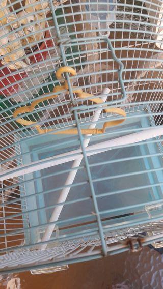 jaula de pájaro, periquitos azul claro