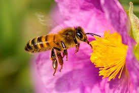 Apiculturas, abejas, material apicola