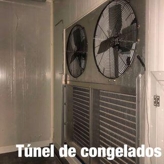 Túnel y cámara de congelados
