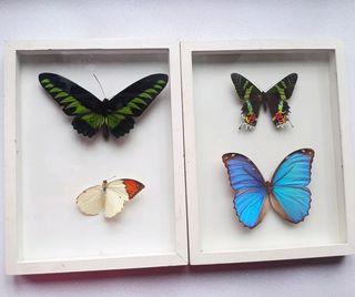 Cuadros vintage mariposas