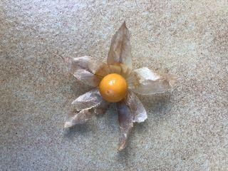 Venta Fruta de Uchuva / aguaymanto / physalis