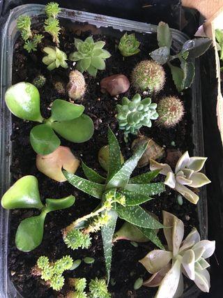 Centro de suculentas y cactus