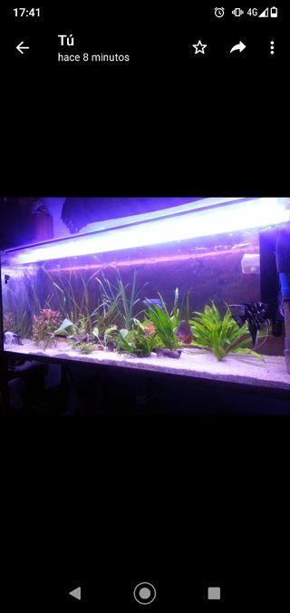 acuario pecera 500 litros