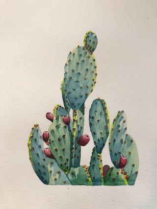 Acuarela original cactus